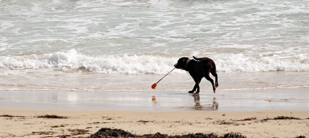 Pet Friendly Holidays at Welcome Family Holiday Park, Dawlish Warren, Devon
