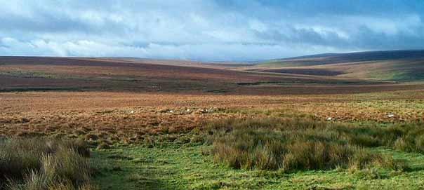 Dartmoor Photo by Richard Knights
