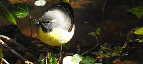 Birding in Dawlish - Photo by Roger Asa Aherne