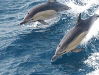 Dolphin's in South Devon