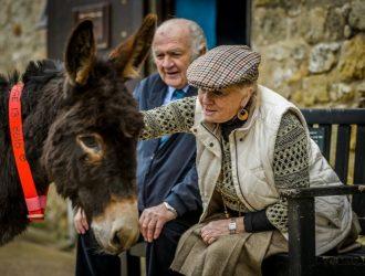 Donkey Sanctuary, Sidmouth