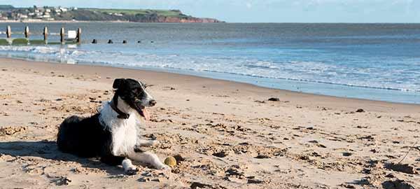 Dog at Dawlish Warren beach
