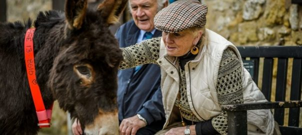 Lady petting a donkey and the Donkey Sanctuary in Sidmouth