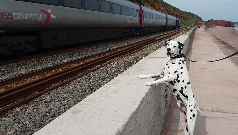Dog Friendly Holidays - Dog watching the trains at Dawlish