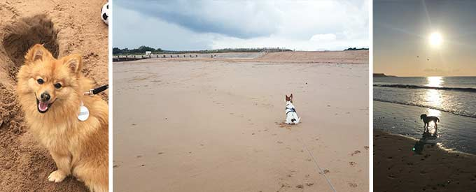 Dogs on Holiday at Welcome Family, Dawlish Warren, Devon