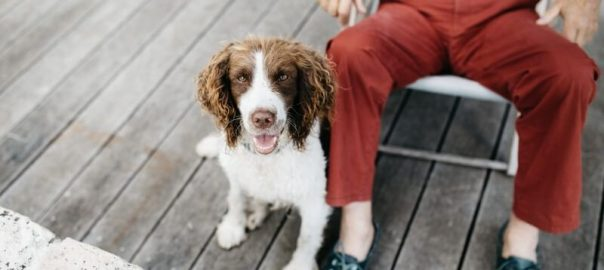 dog friendly holiday parks in devon