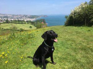 Dog on hillside walk in South Devon