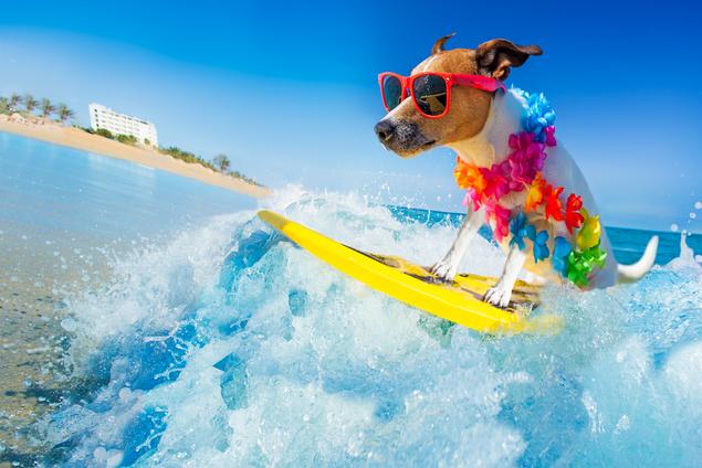 dog surfboarding